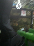 Bass in Bus